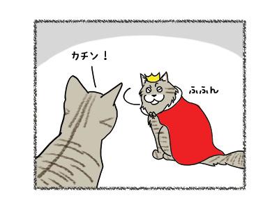 22062018_cat2.jpg