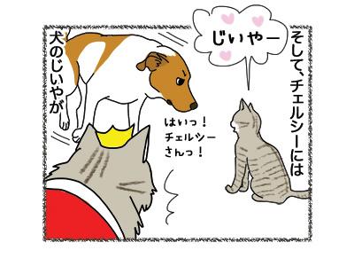 22062018_cat3.jpg