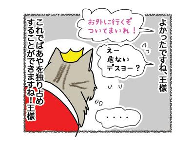 22062018_cat4.jpg