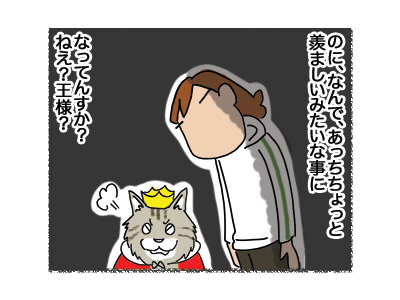 22062018_cat5.jpg