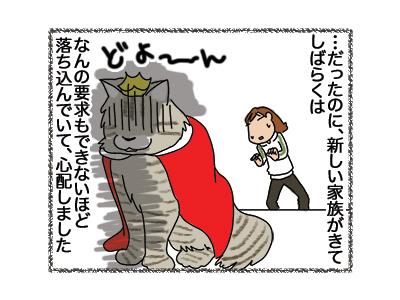 23042018_cat2.jpg
