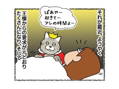 23042018_cat3.jpg