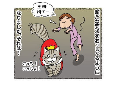 23042018_cat4.jpg