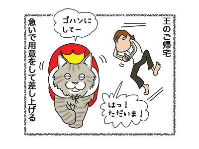 23052018_cat2.jpg