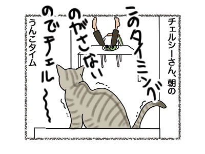 23052018_cat4.jpg