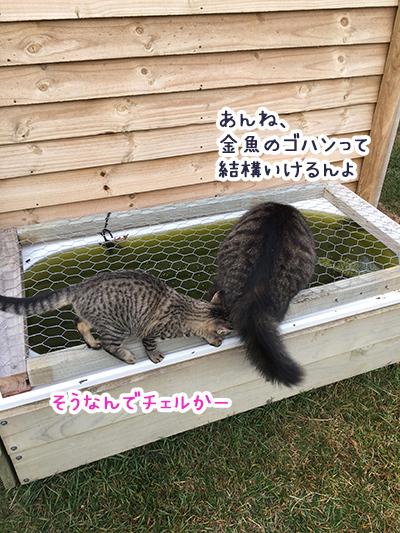 23062018_cat1.jpg
