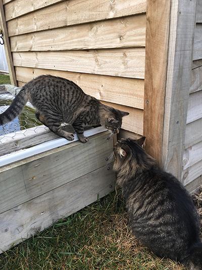 23062018_cat2.jpg