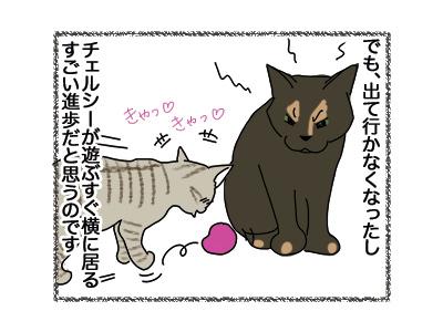 24042018_cat2.jpg
