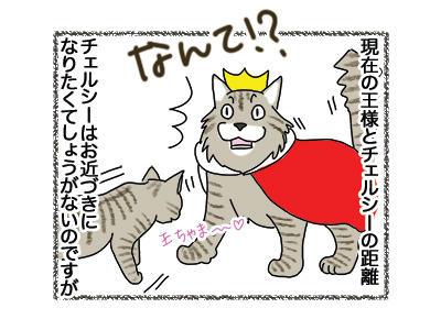 24042018_cat3.jpg