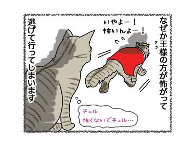 24042018_cat4.jpg