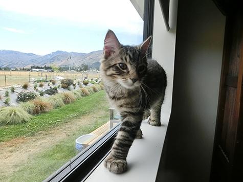 25042018_cat2A.jpg
