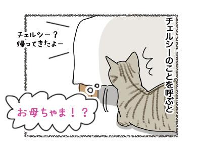 25062018_cat2.jpg