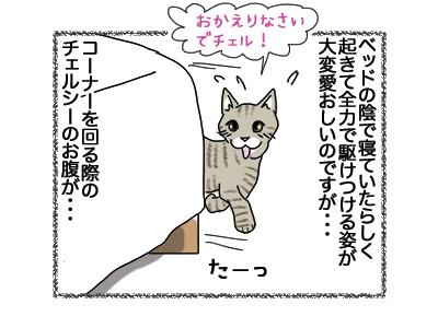 25062018_cat3.jpg