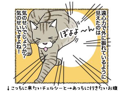 25062018_cat4.jpg