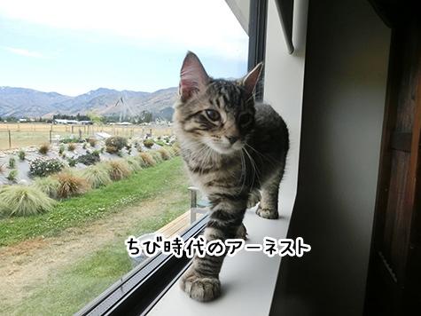 26042018_cat1.jpg