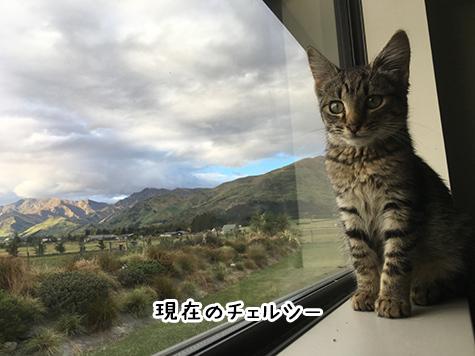 26042018_cat2.jpg