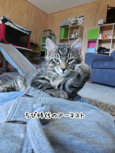 26042018_cat3.jpg