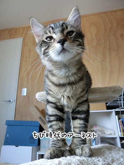 26042018_cat6.jpg