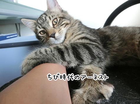 26042018_cat7.jpg
