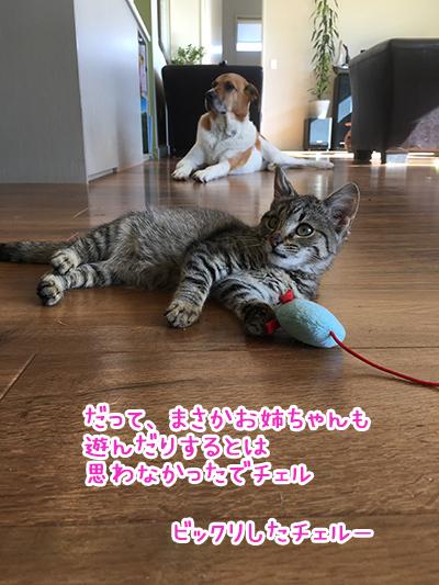 27042017_cat5.jpg