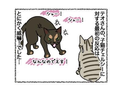 27042018_cat1.jpg