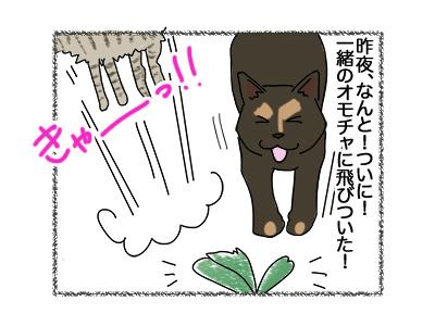 27042018_cat3.jpg