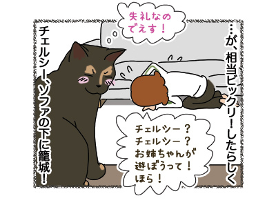 27042018_cat4.jpg