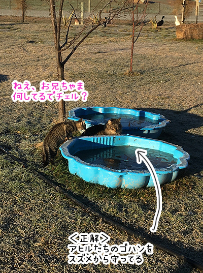 27062018_cat1.jpg