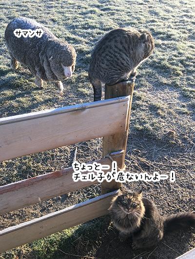 27062018_cat2.jpg