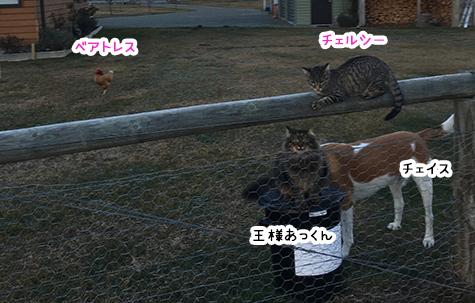27062018_cat6.jpg