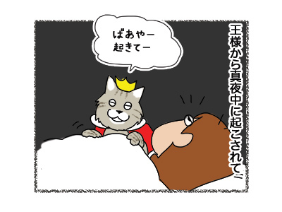 28042018_cat1.jpg