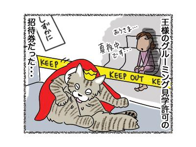 28042018_cat4.jpg