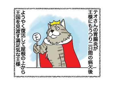 29052018_cat1.jpg
