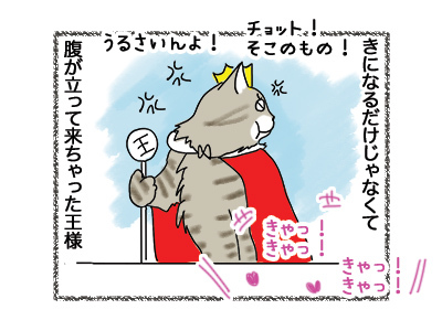 29052018_cat3.jpg