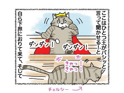 29052018_cat4.jpg