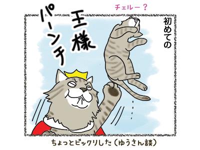29052018_cat5.jpg