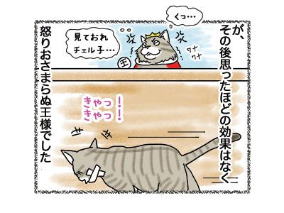 29052018_cat6.jpg