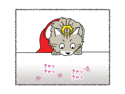 29062018_cat1.jpg