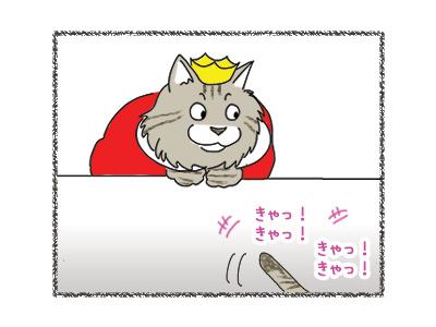 29062018_cat3.jpg