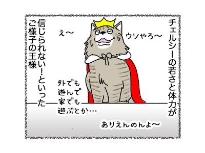 29062018_cat4.jpg
