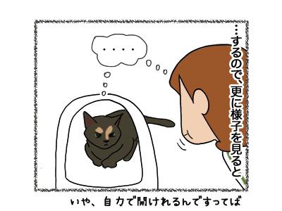 30052018_cat5.jpg