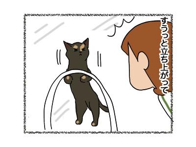 30052018_cat6.jpg