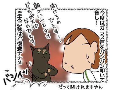 30052018_cat7.jpg