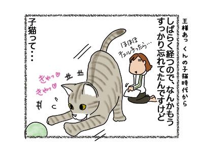31052018_cat1.jpg
