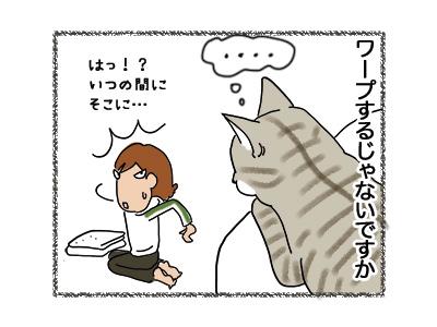 31052018_cat2.jpg