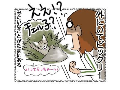 31052018_cat4.jpg