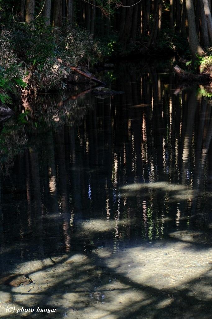 清流と木々の神々
