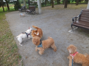 アンデルセン公園ドックラン