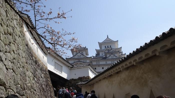 姫路城と桜 (4)