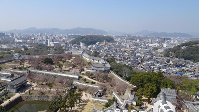 姫路城と桜 (5)